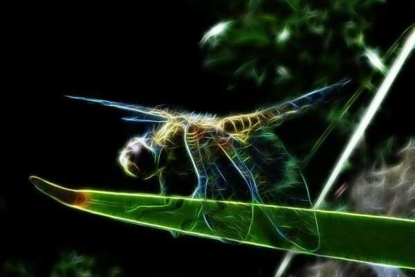 Nature Diamond Painting Kit - Dragonfly On A Leaf-Square 20x30cm- - Paint With Diamonds