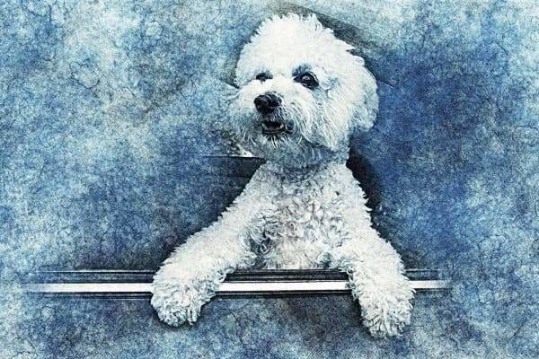 Dog Diamond Painting Kit - Fluffy Mcfluff- - Paint With Diamonds
