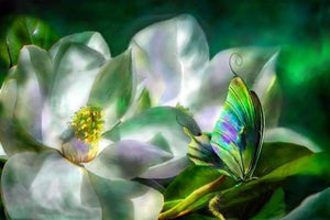 Flower Diamond Painting Kit - Magnolia-Square 20x30cm- - Paint With Diamonds