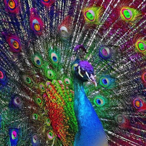 Peacock Diamond Painting Kit - Peacock Showcase-Square 20x20cm- - Paint With Diamonds