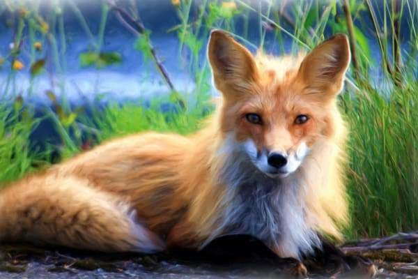 Nature Diamond Painting Kit - Posing Fox-Square 20x30cm- - Paint With Diamonds