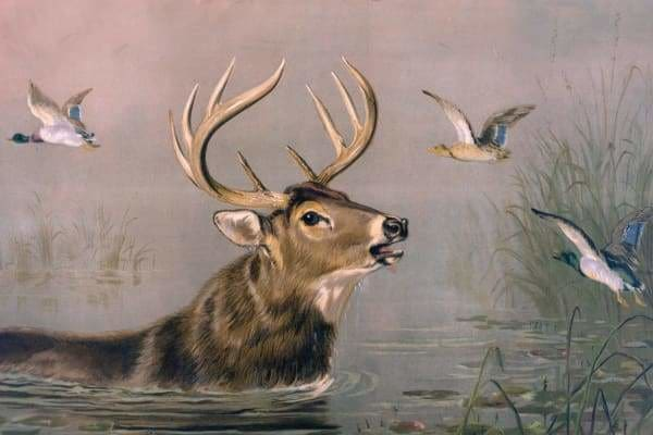Deer Diamond Painting Kit - Stag In Water-Square 20x30cm- - Paint With Diamonds