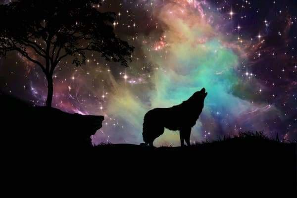 Starry Night Wolf