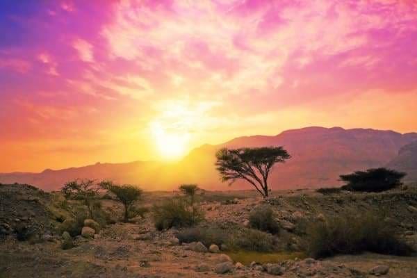 Tree Diamond Painting Kit - Sunset In The Desert-Square 20x30cm- - Paint With Diamonds