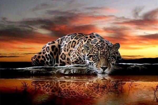 Sunset Diamond Painting Kit - Thirsty Leopard-Square 20x30cm- - Paint With Diamonds