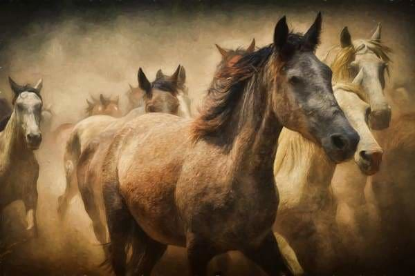 Horse Diamond Painting Kit - Wild Stallion-Square 20x30cm- - Paint With Diamonds