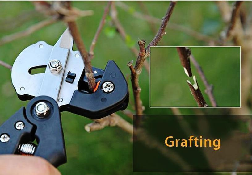 2 in 1 Graft Tool Pro - 	Swiss Grafting Tool - Professional - PropelGear
