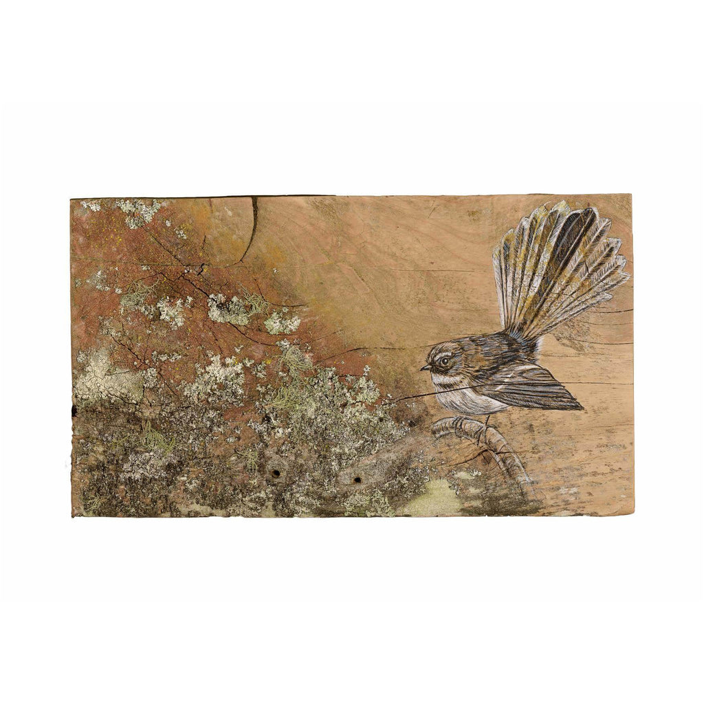 Fantail with Lichen - A4 Print