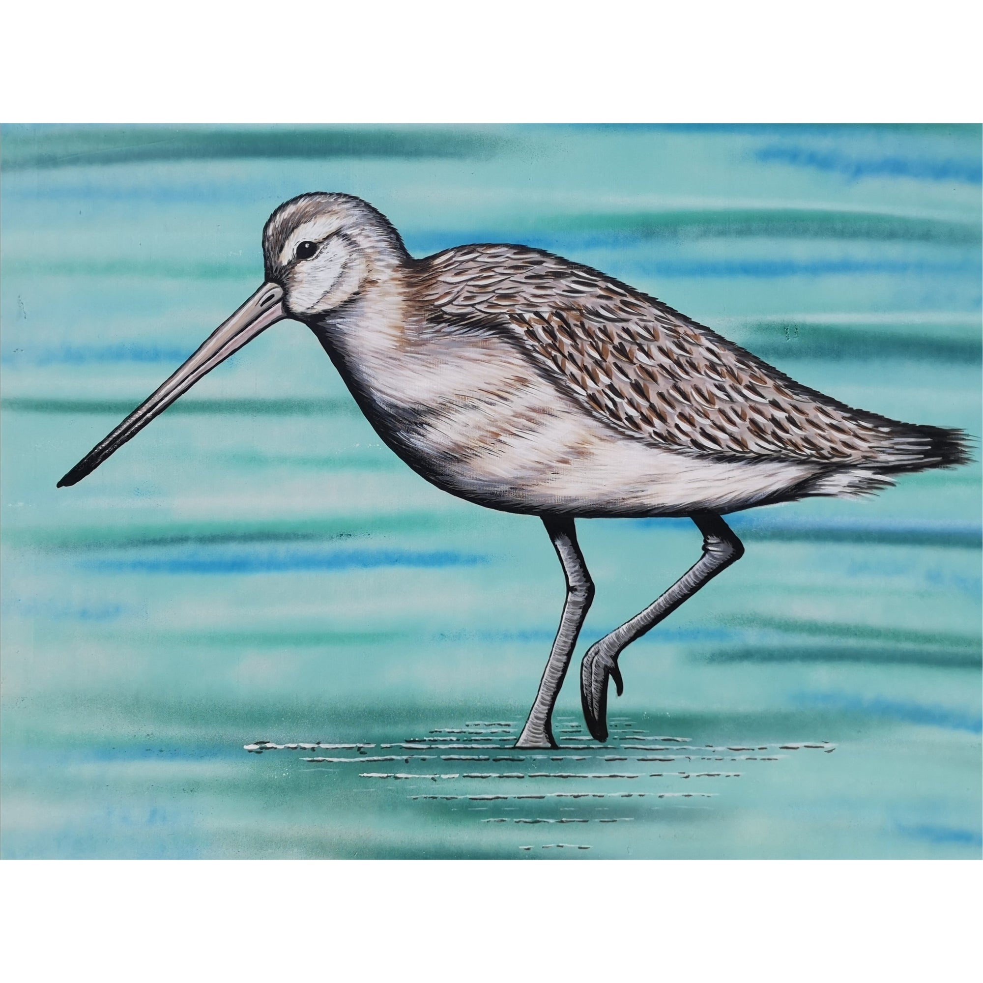 Greenwood Kindy Godwit Presale