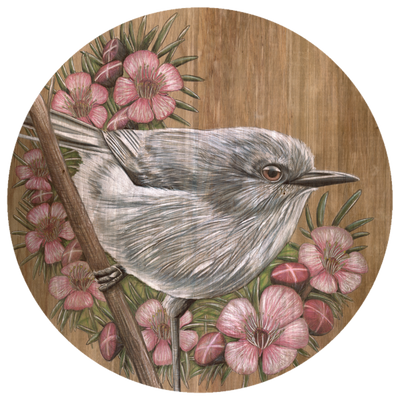 Grey Warbler and Manuka Flowers art dot