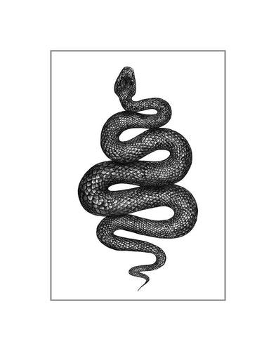 Matted: The Snake: The Night Creature Collection