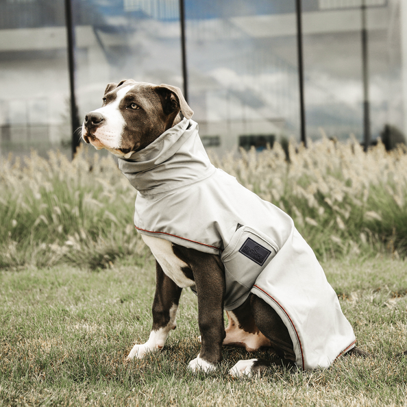 Kentucky Dog Rain Coat