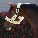 Kentucky Shipping Halter -  Kentucky