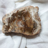 Petrified Wood Polished Slice 3
