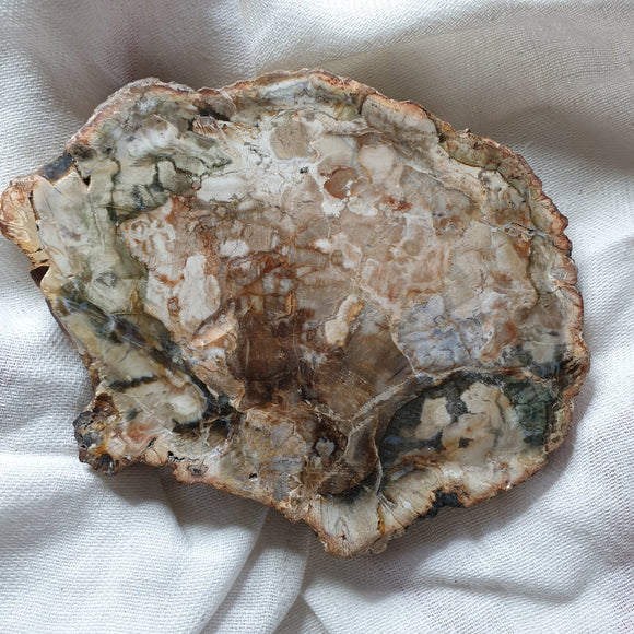 Petrified Wood Polished Slice 4