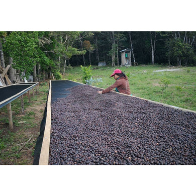 Panama MI FINQUITA Natural Geisha  - Coming Soon!