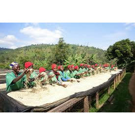 Single Rwanda Coko honey & peaberry 100% micro-lot (Roast to order)
