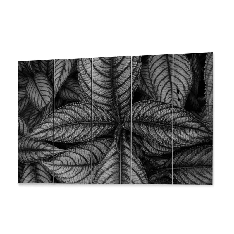 Purple Leaves Persian Shield Canvas Print