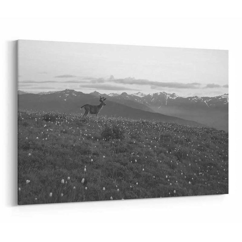 Olympic National Park Canvas Wall Art
