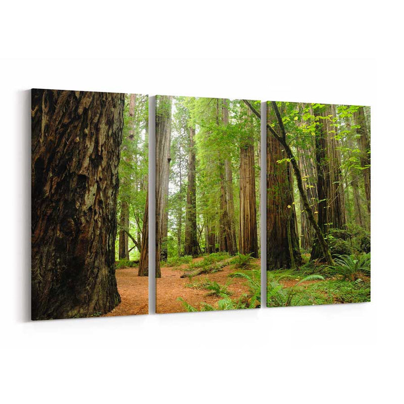 Redwood National Park Canvas Print
