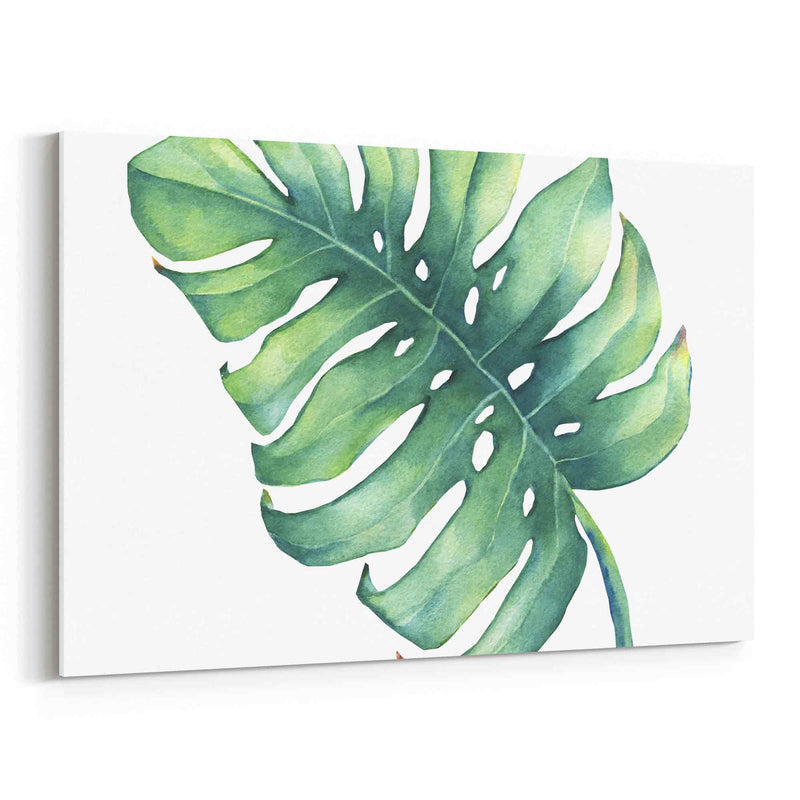 Leaf Of Monstera Plant Canvas Print
