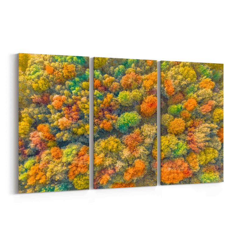 Autumn Aerial View Canvas Print