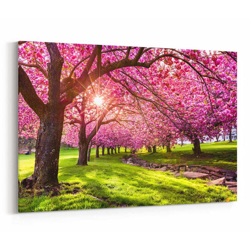 Cherry Tree Blossom Canvas Print