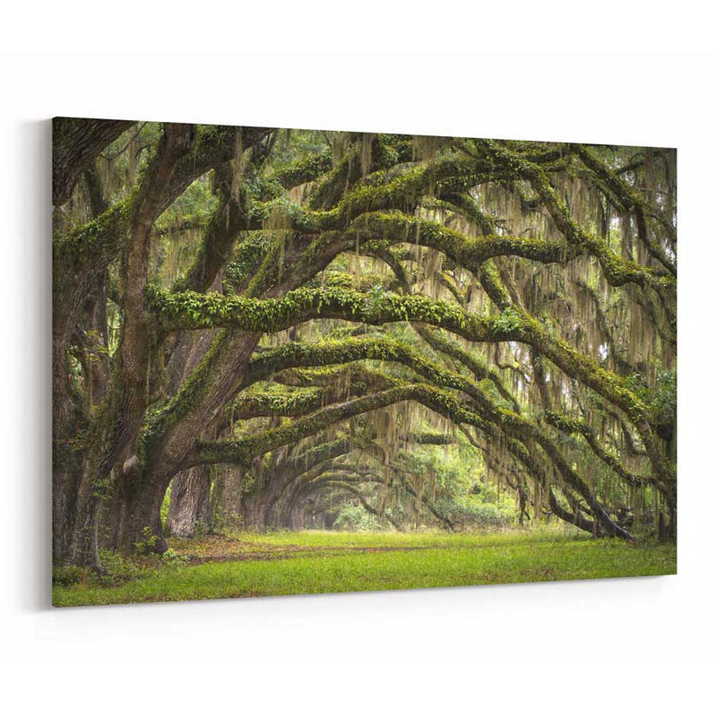 Oak Tree Canvas Wall Art