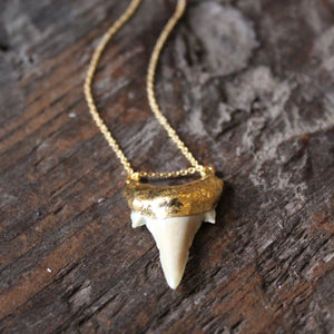 Light Fossilized Shark Tooth