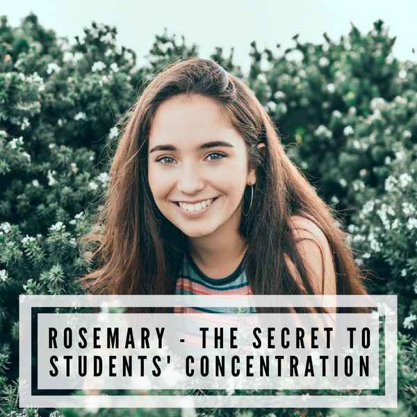Rosemary essential oil helps with concentration