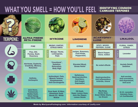 Terpenes aromas and benefits