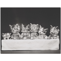 Vintage Hungry Kittens Placemat | Meow Cat Imports
