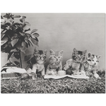 Vintage Kittens On A Picnic Placemat
