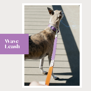 Wave Long Leash