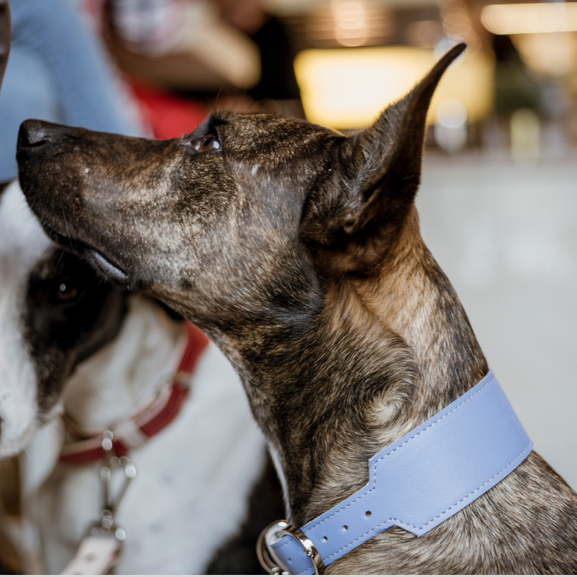 Basic Collar for dogs with longer neck