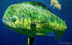 The Guide to Buying the Best Offshore Fishing Lures