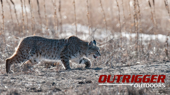 Get that bobcat you've always wanted.