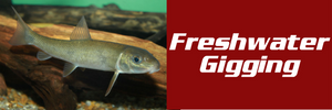Freshwater Fish Gigging: Rivers, Streams, and Lakes
