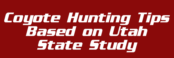 Calling all Coyotes: Proven Tips for a Successful Coyote Hunt Across the United States