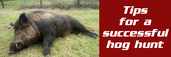 Tips and Tricks for a Successful Hog Hunting Trip