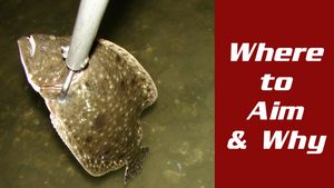 Flounder Gigging: Where to Aim and Why?