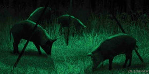 What is the Best Bow Light for Night Hunting?