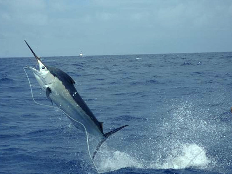 5 Tips for a Successful Offshore Fishing Trip