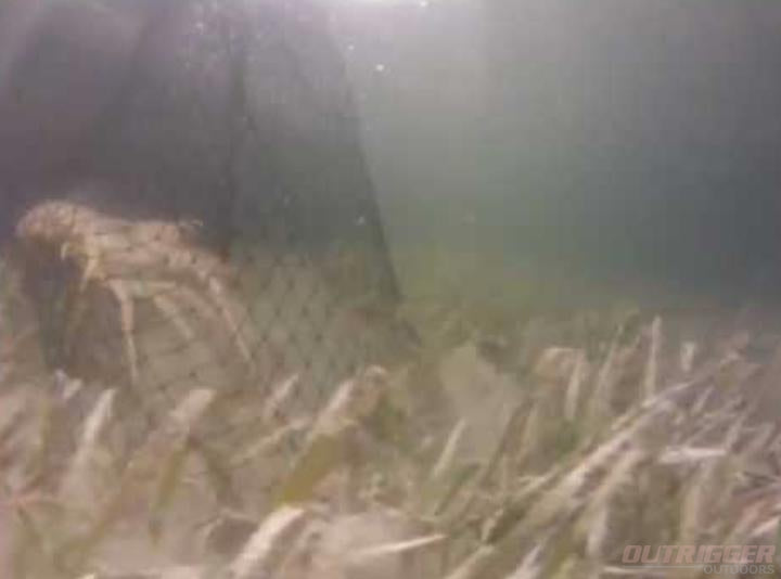 Bully Netting for the Florida Lobster
