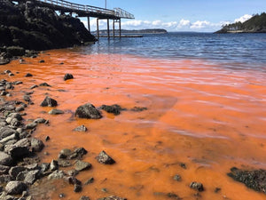 The Red Tide Exposed - Plan Your Fishing Trips Accordingly