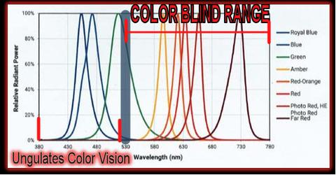 Varmint Color Spectrum