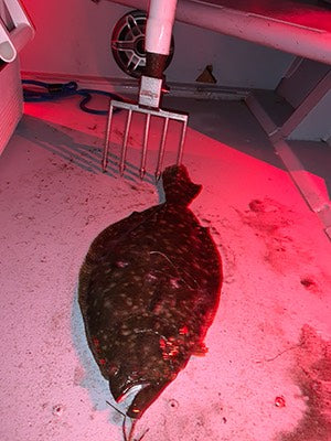 flounder in boat with gig