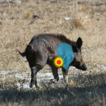 where to aim when bow hunting hogs