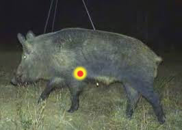 where to aim when pig sticking hogs with a knife