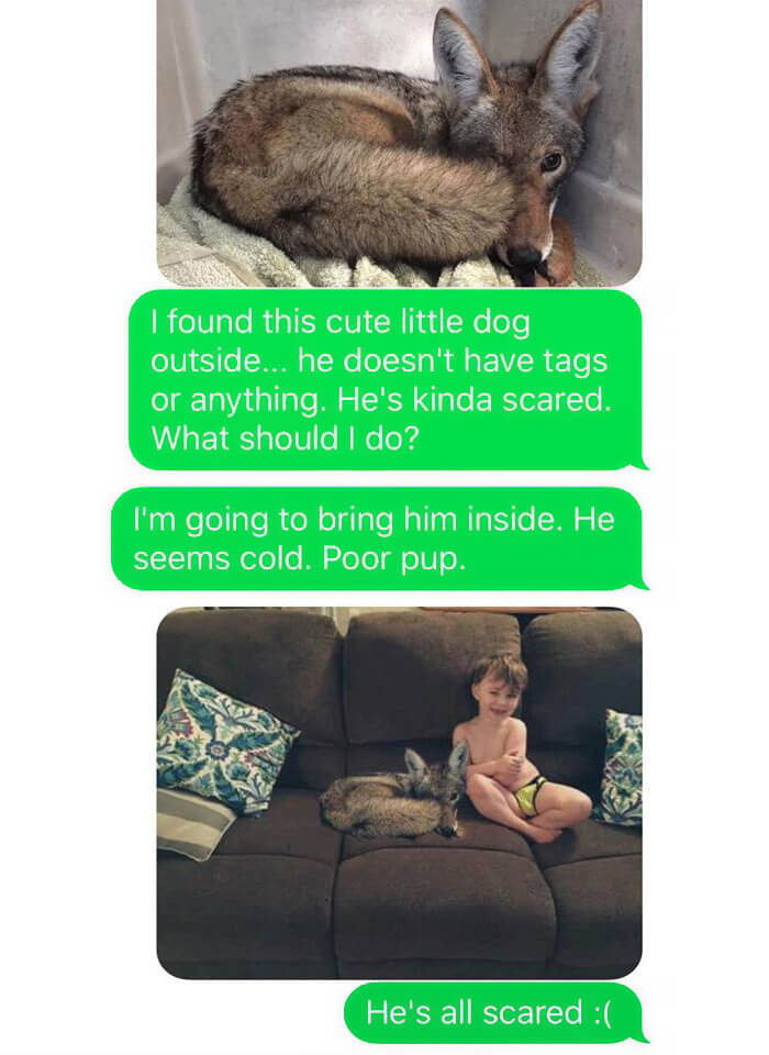WIFE TEXTS HUSBAND SHE BROUGHT A DOG HOME WHILE THE PIC SHOWS A COYOTE, AND HE SERIOUSLY FREAKS OUT